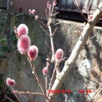 庭には春が来ているよ
