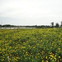 蘇州 太湖 西京湾