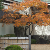 第10回 都立庭園紅葉めぐりスタンプラリー