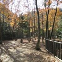 濃溝の滝ー紅葉