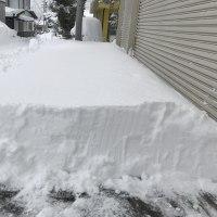 雪、積もる