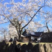 飯山城へ花見
