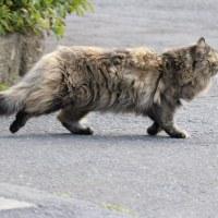 猫探訪・・二匹の長毛と次々に遭遇!!