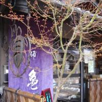 高遠の桜  旅  2017