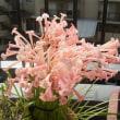 花のリレー キルタンサス