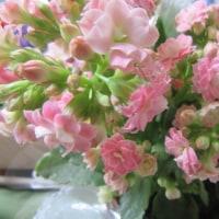 ⁂外に出ると・・色々な花が咲き誇り心弾みます・・・