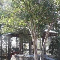 今日の寺カフェ