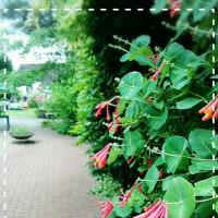 ガーデン&マーケットin東和。