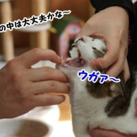 ワクチン接種でダウン~涙