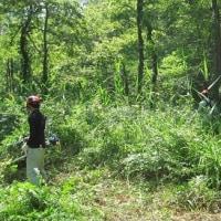 地元の名所 赤名湿地 で草刈りボランティア