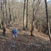 東京都と埼玉県の境界尾根を小沢峠~黒山~棒ノ折山と歩きました 2/2 ――― 日没と競争して少し急ぎました。すると、大変な事態に!