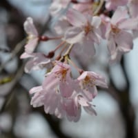 六義園~上野公園