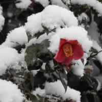 降雪 2017/3/26