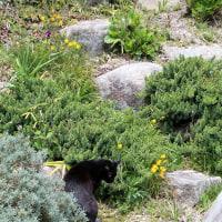 黒猫の庭・・・?