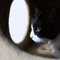 忍び猫と有明海