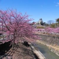 掛川桜と掛川市城10景