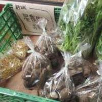 今日の星農園のお野菜は。。。