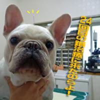 摩緒さん鍼治療24