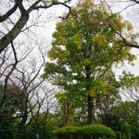 善福寺公園の樹木にも秋らしさが見えてきました その3