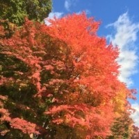 秋の本栖湖「千円札の逆さ富士」