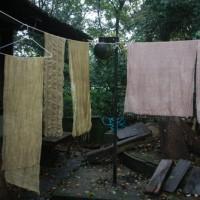 野葡萄と赤芽柏の重ね染めでピンクが染まった  [空想の森の草木染め<54>]