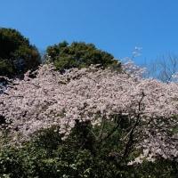 2017 安行の春