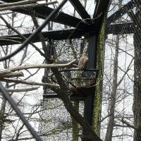 旭山動物園~北海道産動物舎のオオタカ