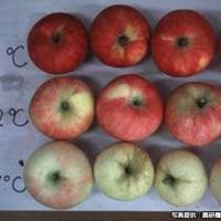 地球温暖化による農作物への影響