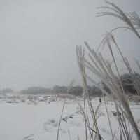 1月23日(月)のえびの高原