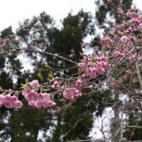 遅い春(#^.^#)