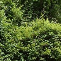 緑の生命力(ツル植物)