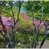 軽井沢町植物園   (3の1)  ★ 2017.05.29 ★