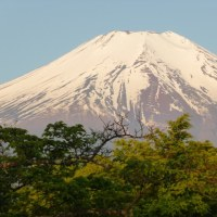 綺麗な富士山と春の花