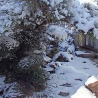 雪の朝に1