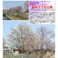 埼玉-581 桜田3丁目公園