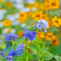28/Oct 相模川河口の星空と花壇の花