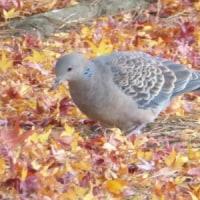 恋しいな落ち葉を踏みしめる鳥たち