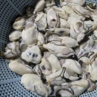 牡蛎フライをストック