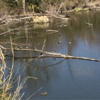 水温む溜池