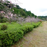 獅子ヶ鼻公園ハイキング