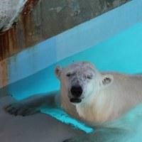 男鹿・八郎潟の観光施設(1) 男鹿水族館GAOに訪問、9年ぶり2回目