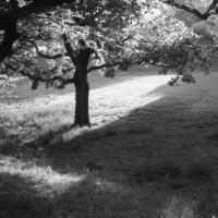 夕方の散歩 3