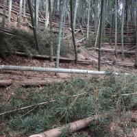 竹藪の片づけ