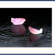 花びらの舟