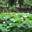 一心寺  菩提池