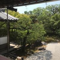 土日は念願の京都参り