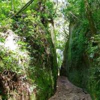 川路の坂(2)