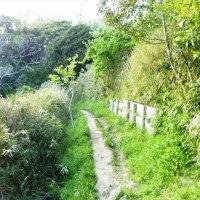 プチ散歩-小坪マリーナから披露山公園へ