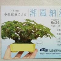 小品盆栽による湘風納涼展のお知らせです。