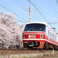 今年は無理か!? 狭山の桜